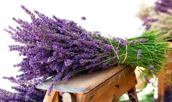 huile essentielle de lavande bouquet