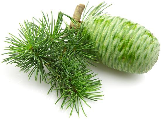 huile essentielle de Cèdre feuilles