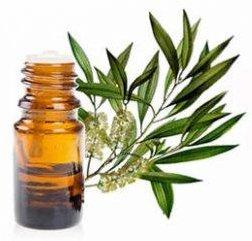 huiles essentielles pour la peau arbre à thé