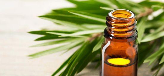 Coronavirus huile essentielle arbre à thé